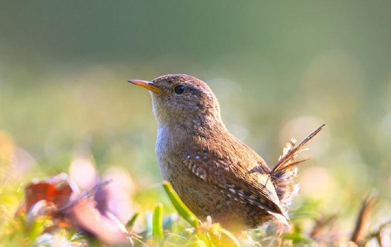 幸せな小鳥